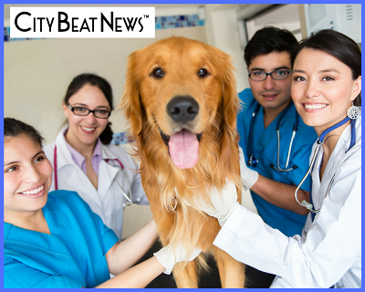 City Beat News Awards Top Veterinary & Pet Service Providers